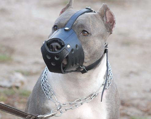 pitbull-dog-muzzle-leather